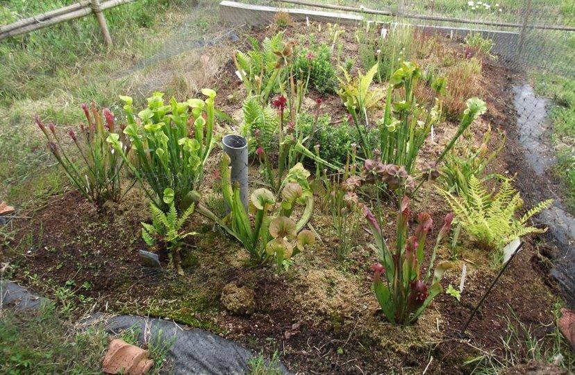 Tourbieres d 39 amateurs de plantes carnivores for Plantes resistant au gel